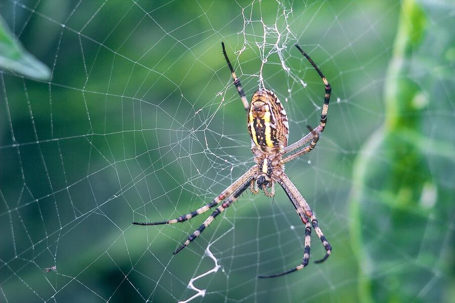 Debt settlement spiders create webs of grief