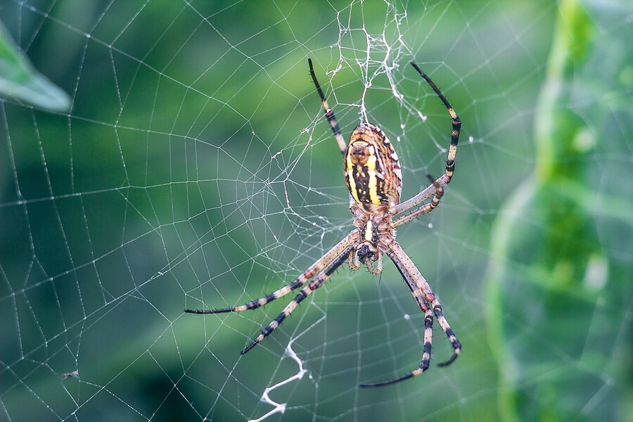 Debt settlement spiders create webs of grief