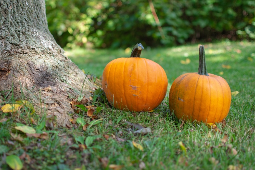 The 9 Coolest & Cheapest Indoor & Outdoor Halloween Decoration Ideas